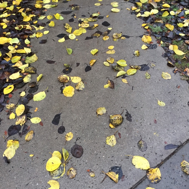 leaves on the ground - photo for blog post